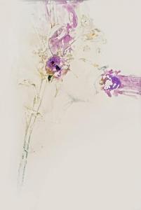 Florae Mentis II 53x78cm