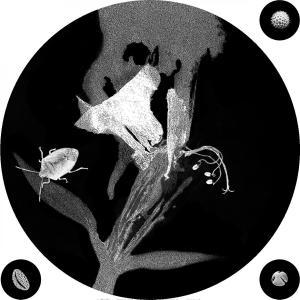 OPERE flowerPower stampa 09