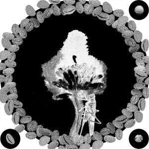 OPERE flowerPower stampa 19